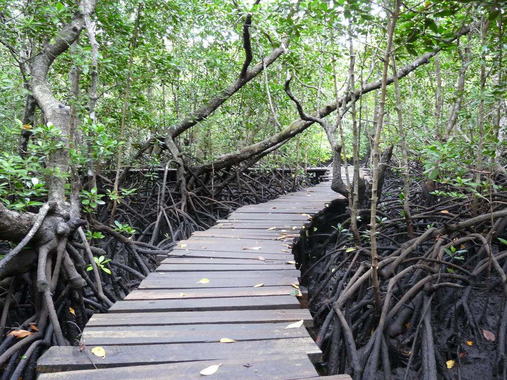 Jozani Forest Hike